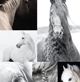 B&W Horses