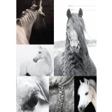 A4 Book Cover - B&W Horses I